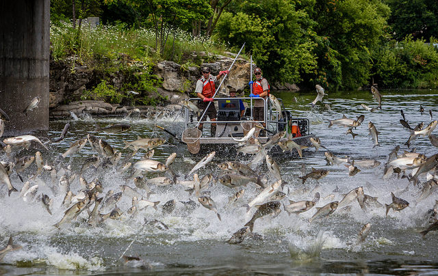 Republicans Block Effort to Save the Great Lakes from Invasive Asian Carp