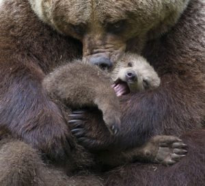 A bear with her cub