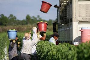Immokalee-Florida Farmworkers